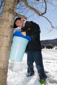 checking the sap in the bucket