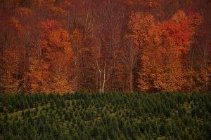 Purinton tree farm in autumn